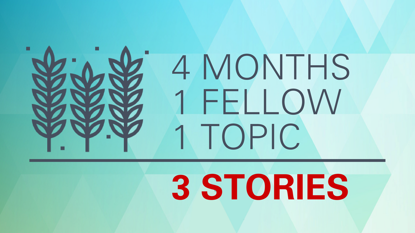4 months, 1 Fellow, 1 topic, 3 stories.