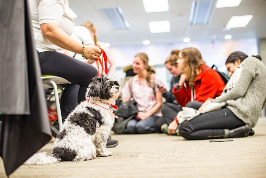 Therapy dogs at the University of Fraser Valley library. Photo: https://www.flickr.com/photos/ufv/24735950867